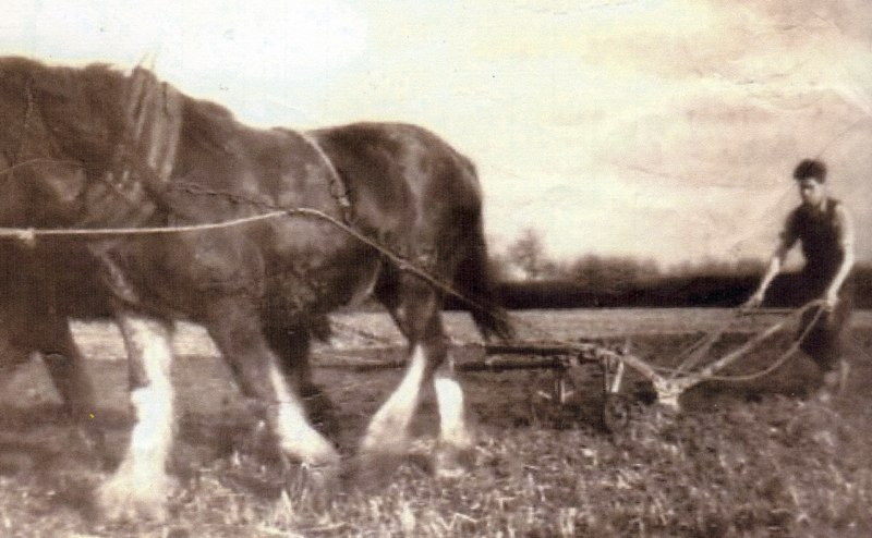 Ploughing with Horses Tansy, Newbridge, 1940s