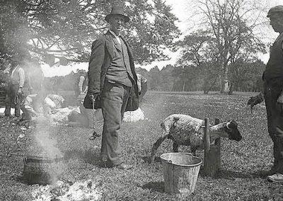 Branding Sheep, Clonbrock