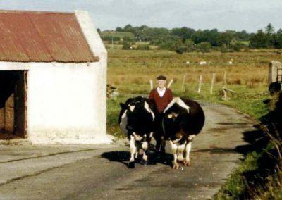 Cattle-droving along a botharín, Corgary