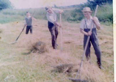 Hay-cutting