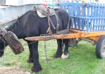 Monivea Fair horse & trap