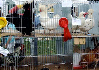 Monivea Fair Hens