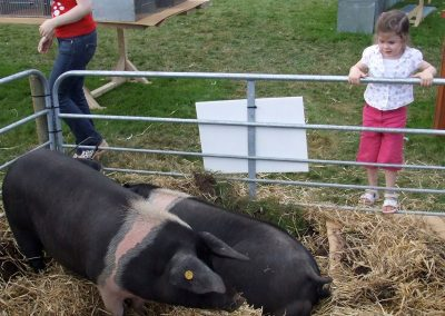 Monivea Fair Pigs